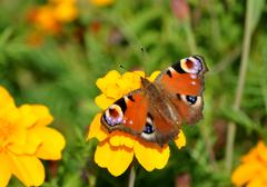 Butterfly on blooming plants Stock Photos