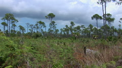 Lucayan National Park on Grand Bahama Stock Footage