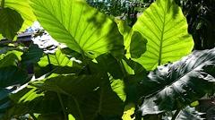 Botanical Garden Outside 25svv Stock Footage
