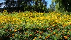 Botanical Garden Outside 28svv Stock Footage