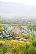 volubilis in morocco africa the old agave - stock photo