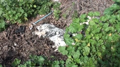 Spotty dog rests on heap of leaves Stock Footage