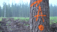 Letter A in the forest - stock footage
