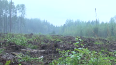 Forest after a clear cut 2 Stock Footage