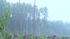 Clear cut in forest 2 Stock Footage