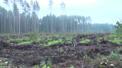 Forest after a clear cut 3 - stock footage