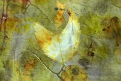 Distressed background with autumn leaves Stock Illustration