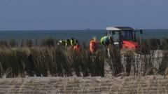 Planting Marram Grass between wind screens on sand dune, erosion control Stock Footage