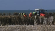 Stock Video Footage of Planting Marram Grass between wind screens on sand dune, erosion control