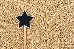 Pointer, the sign lies on  barley - stock photo