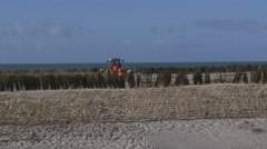 Planting rows of Marram Grass or Helm between wind screens on a sand dune Stock Footage