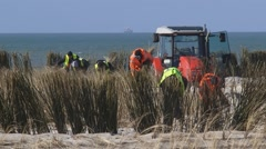 Planting Marram Grass on sand dune along North Sea coast. Dredger at horizon Stock Footage