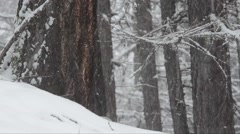 Snowfall in the wood in Gran Paradiso National Park Stock Footage