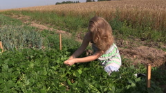 Pregnant farmer woman in dress picking snap beans in farm Stock Footage