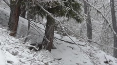 Chamois during snowfall in the Gran Paradiso National Park Stock Footage