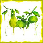 Watercolor branch with pears and apples Stock Illustration