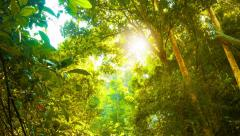 Stream and Rainforest Canopy in Southern Thailand Stock Footage