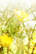 Yellow Floral background Stock Photos