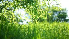Summer park. Green grass, leaves and sunrays. Dolly Shot Stock Footage