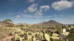 Cabo de gata spain desert cactus nature wilderness Stock Footage
