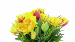 Growing, opening and rotating tulips bouquet, DCI 4K Stock Footage