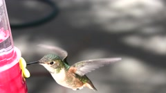 Hummingbird feeding closeup downward angle Stock Footage