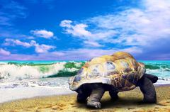 Big Turtle on the tropical oceans beach - stock photo