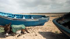 Donkey boat pony sea coast morocco Stock Footage
