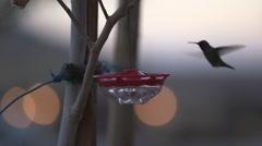 Hummingbird at feeder wtih bokeh in background Stock Footage