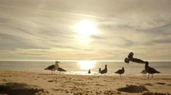 Seagulls at Sunset - Beach Birds on Sand Stock Footage