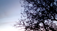 Fall Trees at Sunset Stock Footage
