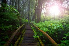 wood ways in mountain rain forest Doi Inthanont National Park Chiangmai north - stock photo