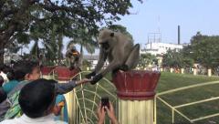 Monkey and prayers near Dakshineswar Kali temple,Kolkata, India Stock Footage