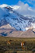 Chimborazo volcano in andean Ecuador Stock Photos