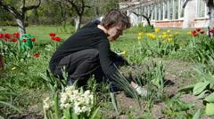 Panorama of gardener girl work between tulip flower beds Stock Footage
