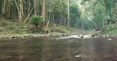 Calm Forest River - stock footage