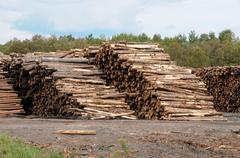 Quebec; log in a sawmill in Saint Adalbert - stock photo