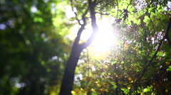 From the bottom shot of foliage and sunbeam. Stock Footage