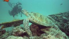 Female scuba diver looking at a green sea turtle resting on coral reef Stock Footage
