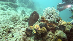 Scuba diver films octopus underwater Stock Footage