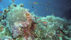 Scuba diving along coral reef wall Stock Footage