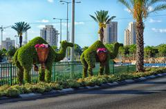 Topiary camels standing on dividing line of motorway - stock photo
