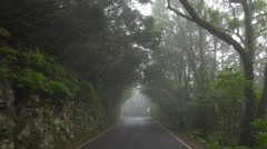 POV. Driving under canopy of mountain relict misty forest, Tenerife, Canary. - stock footage