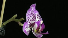 Orchid flower Stock Footage