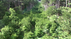 Cableway Forest Timelapse - stock footage