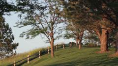 Grassy Field With Trees & Fence - stock footage