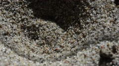 Ant larva in the sand refuses a dead ant and ravaged Stock Footage