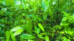 Rain Soaking Dense Jungle Undergrowth in Thailand Stock Footage