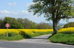 contryside road in Bois Jerome Saint Ouen - stock photo