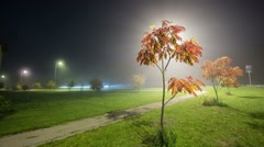 Ash tree at night with fog Stock Footage
